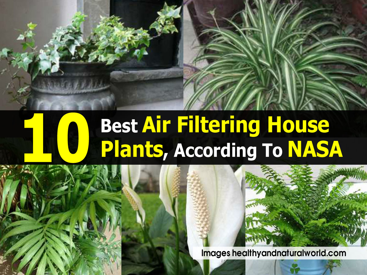 10 best air filtering house plants according to nasa for Best air filtering houseplants