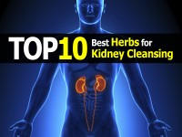 herb-for-kidney-cleansing1