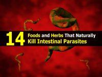14 Foods and Herbs That Naturally Kill Intestinal Parasites