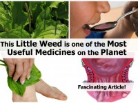little-weed-most-useful-medicines