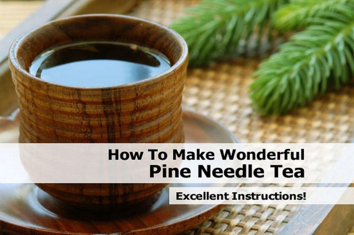 make-wonderful-pine-needle-tea