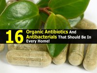 16 Organic Antibiotics And Antibacterials That Should Be In Every Home!