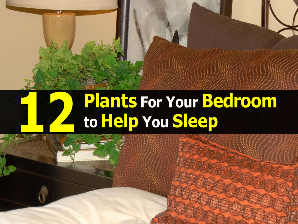plants for bedroom1