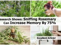 sniffing-rosemary-can-increase-memory