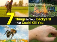 things-in-backyard-that-could-kill-you1